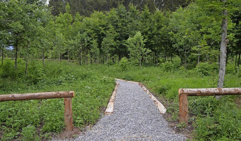 Im Ruhewald stehen 40 junge Bäume für ...in kleiner Weg führt auf das Gelände.     Foto: Christiane Sahli