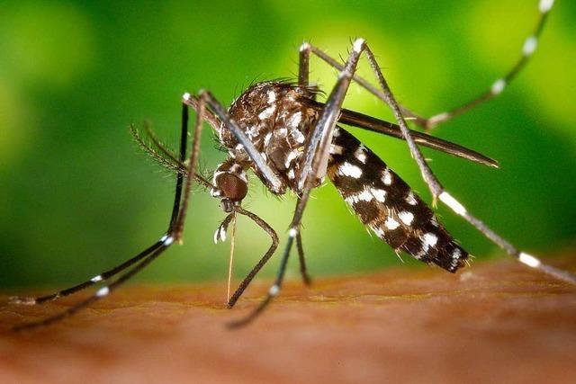 Wie gefährlich sind Mückenstiche in Deutschland?