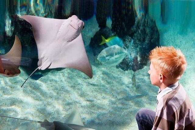 Bunte Meereswelt hautnah: Nachwuchs bei den Rochen im Sea Life Konstanz