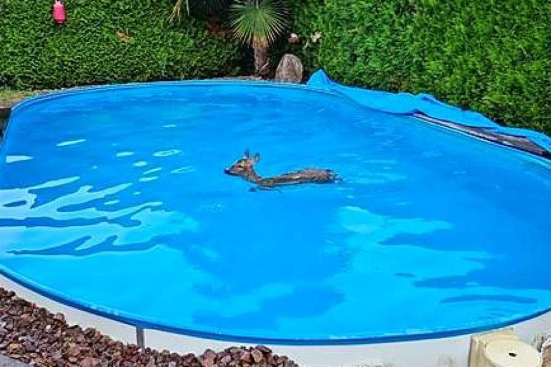 Aus eigener Kraft kam das Reh nicht aus dem Pool heraus.  | Foto: Polizei
