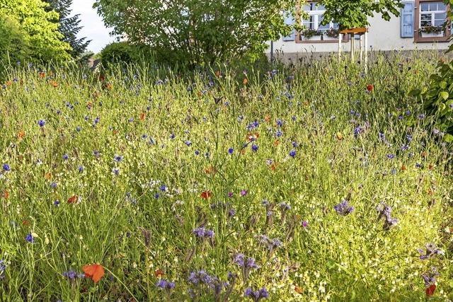 Gemeinde sorgt für artenreiche Blühflächen