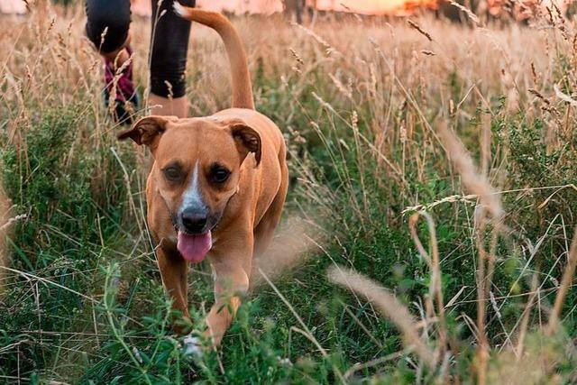Müssen bald auch Haustiere mit Corona-Infektion gemeldet werden?