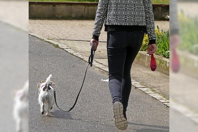 Neuer Versuch bei Hundesteuer
