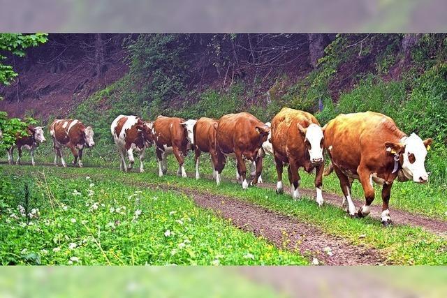 Alle Kühe sind auf den Weiden