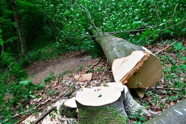Forst sperrt illegalen Single-Trail – und aus Versehen einen Fußweg