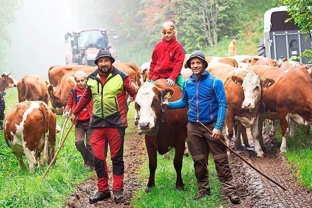 Endlich darf das Vieh wieder auf die Sommerweide