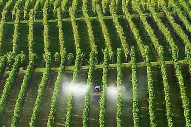 Wie wichtig ist der Pflanzenschutz im Weinberg?