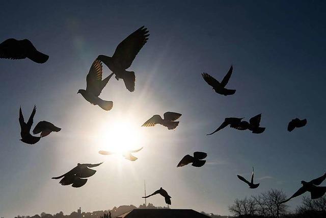 Meine Corona-Geschichte ist die Geschichte einer Taube