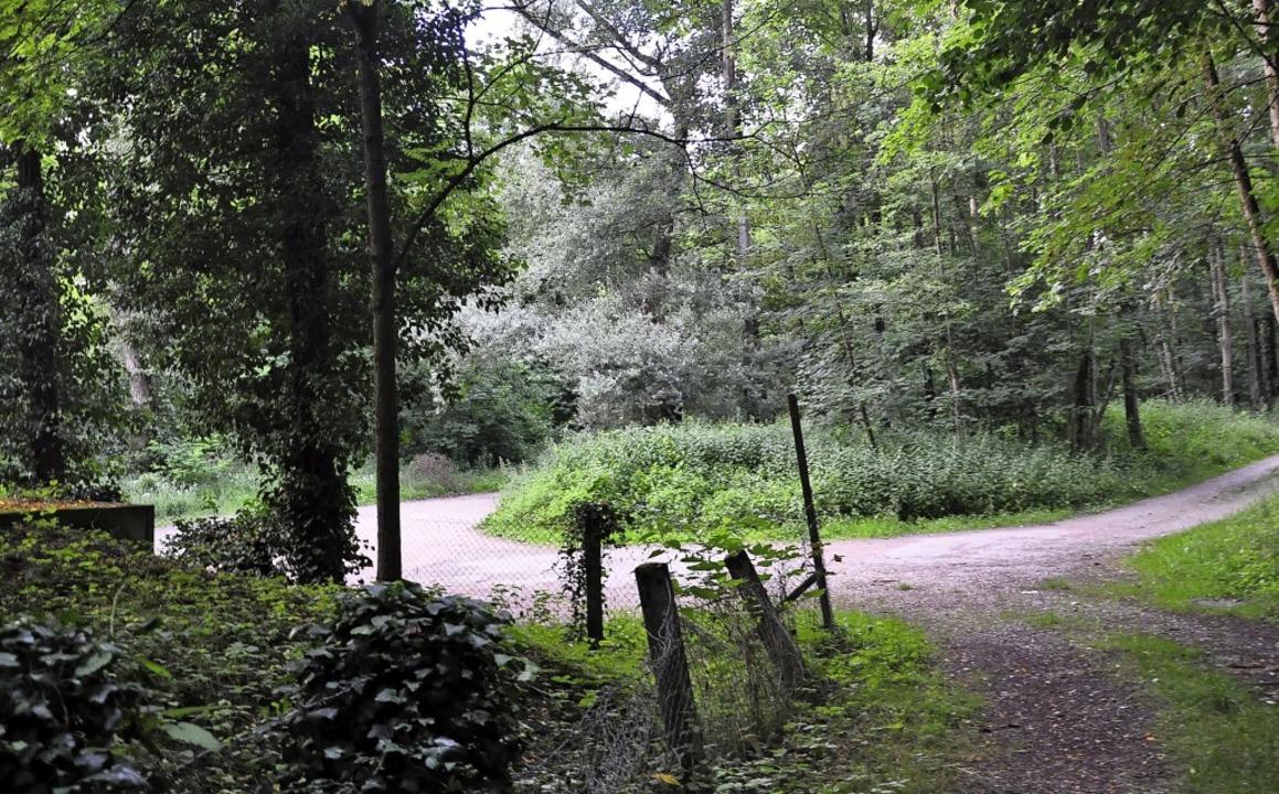 Im Wald unterhalb von Bamlach zwischen...oher Mobilfunkmast aufgestellt werden.    Foto: Jutta Schütz