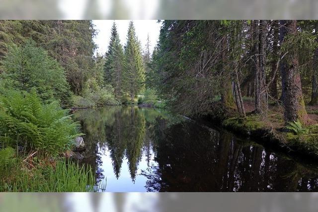 Fließender Bach statt stillem See