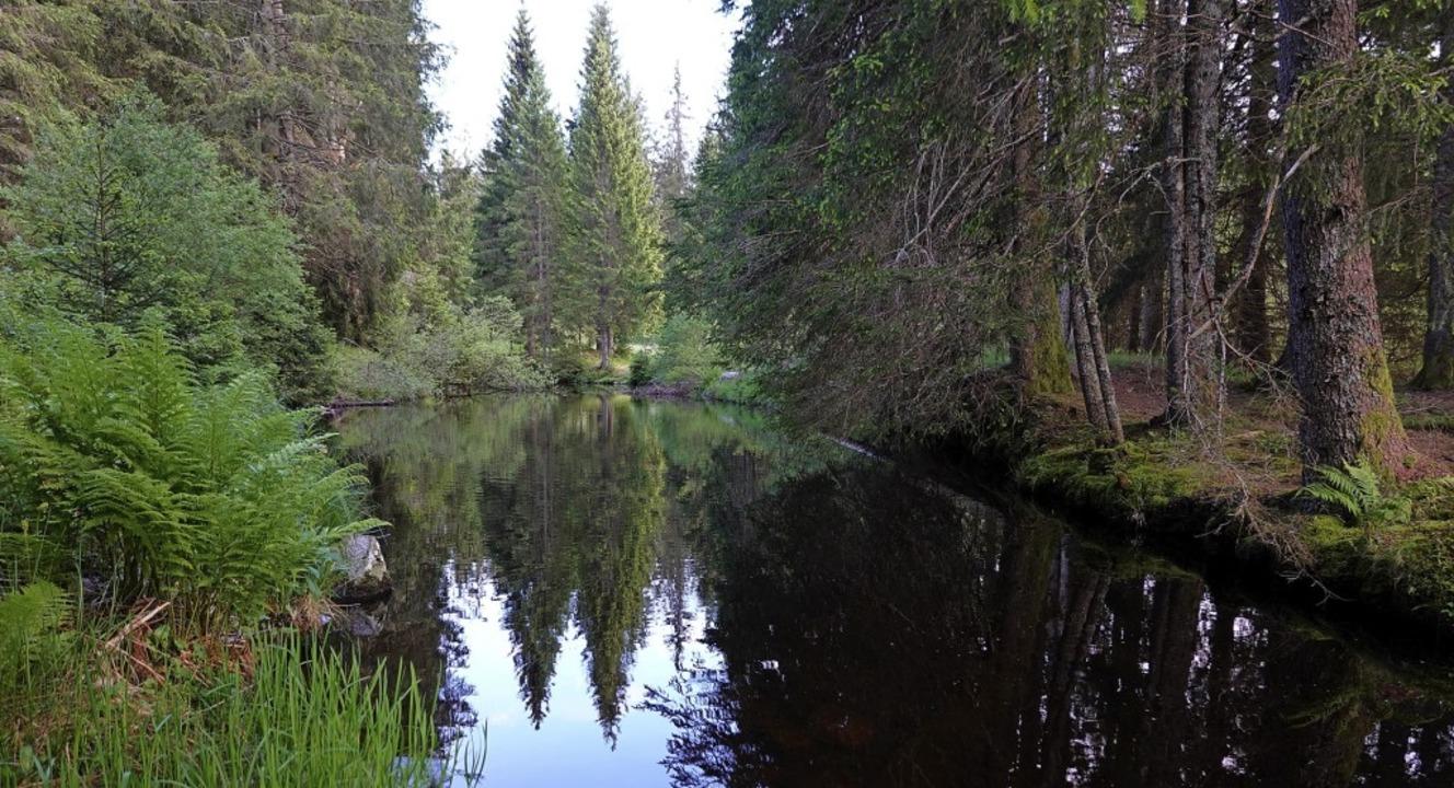 Der kleine See im Lindauer Tal wird ve...es wieder naturnah hergestellt werden.  | Foto: Hans-Jürgen Sackmann