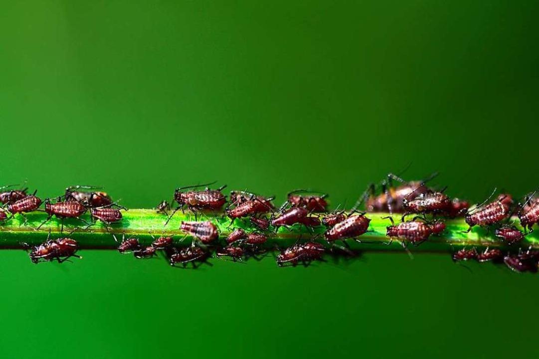 Für  Vögel, Spinnen, Ohrwürmer und Mar...ür den Menschen sind sie  eher lästig.    Foto: leopictures  (stock.adobe.com)