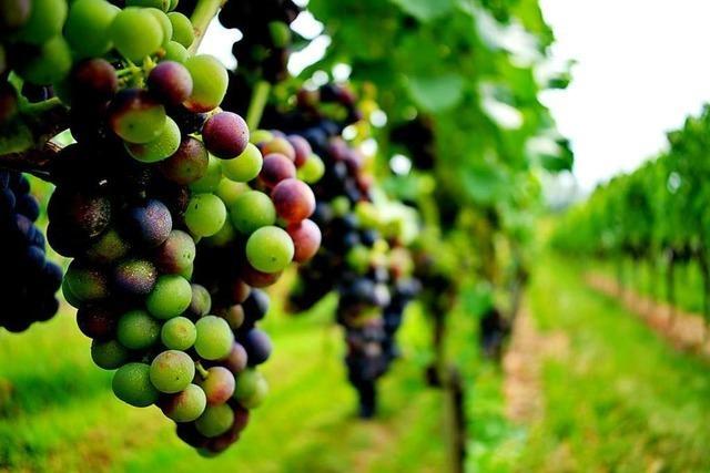 Wein und Natur