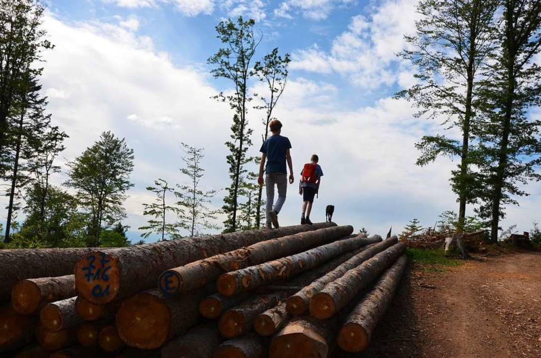 Sprichwörtlich auf dem Holzweg  | Foto: Anita Fertl