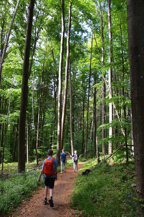 Plötzlich im Dickicht und duftender Waldluft  | Foto: Anita Fertl