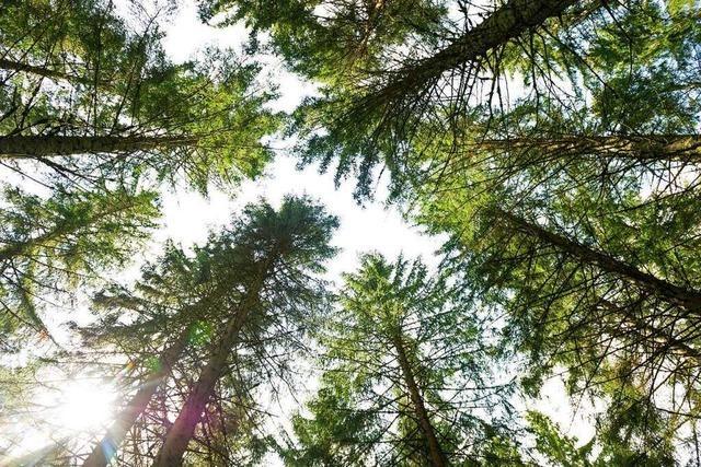 Neuer Waldbadepfad in Bollschweil lädt zur Entspannung ein