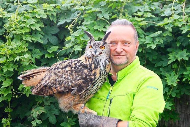Falkner Axel Haas hat den Computer gegen Greifvögel getauscht