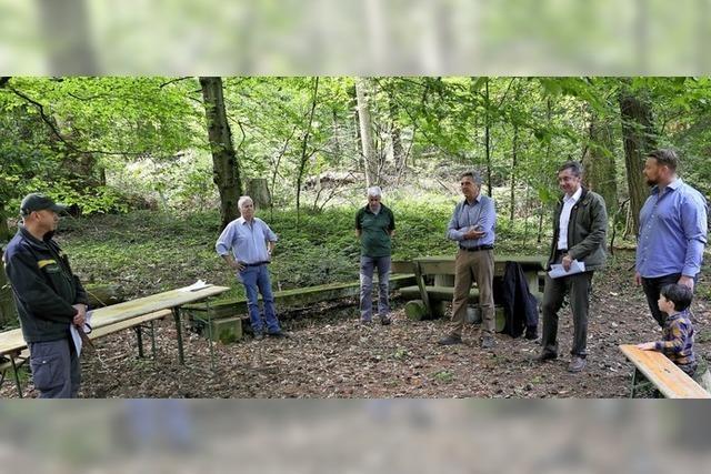 Droht Privatwald zu verwildern?