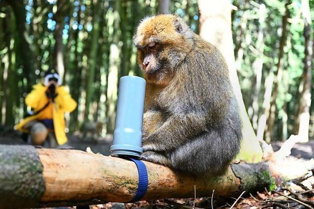 Forscher sind dem Duft der Affen auf der Spur
