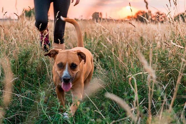 Ein neuer Anlauf für eine Hundewiese in Lahr
