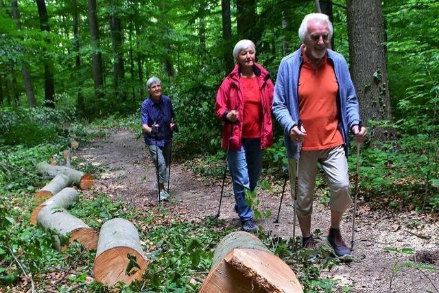 Der Waldpfad in Rümmingen ist wieder zugänglich