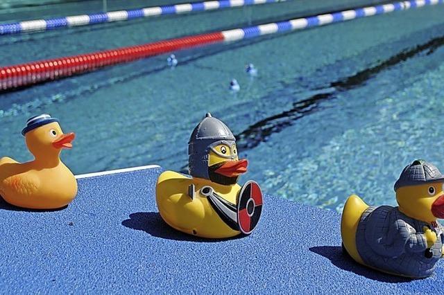 Wie Entenfamilien hintereinander her schwimmen
