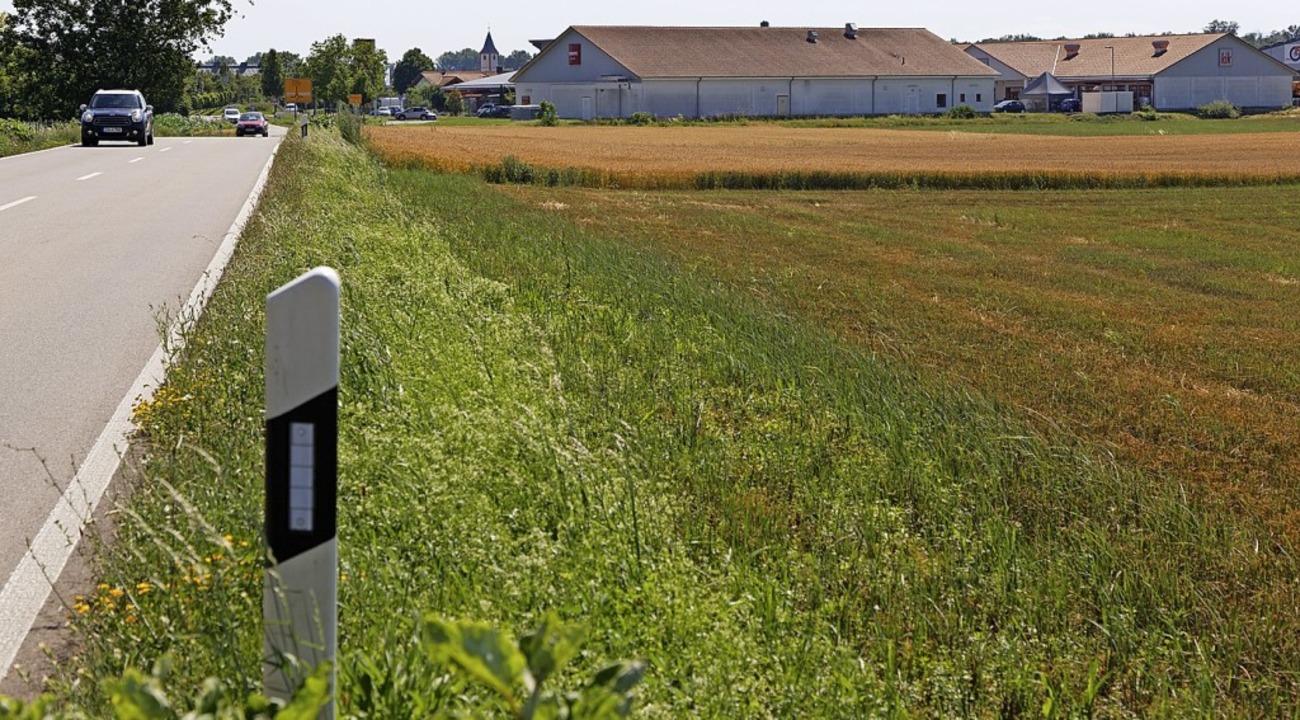 Im Norden von Sasbach soll weitere Gew...ne direkte Anbindung an die L 104 ab.     Foto: Martin Wendel