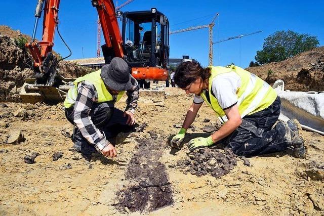 Alte Gräben in Freiburg-Tiengen stellen Archäologen noch vor Rätsel
