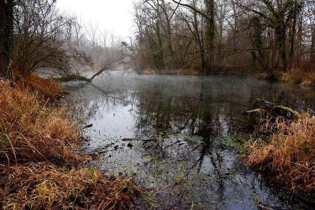 Wie das Land die Gemeinden am Oberrhein vor Hochwasser schützen will