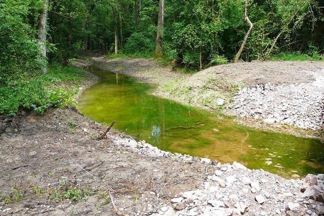 Großprojekt zum Hochwasserschutz führt zu Streit um ökologische Flutungen