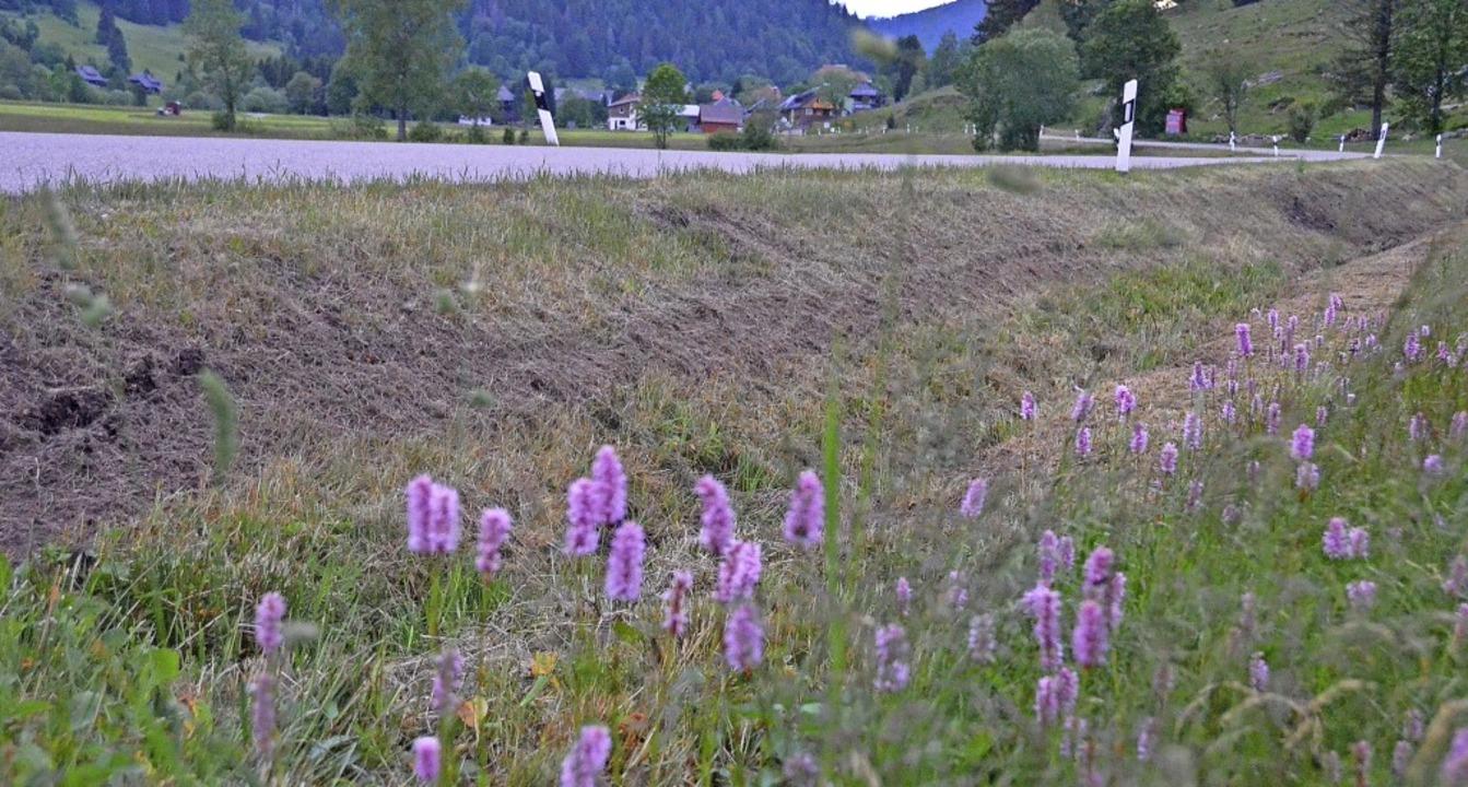 Gemähte Böschungen oder Blütenpracht? ...en und überhaupt gemäht werden müssen.  | Foto: Sebastian Barthmes