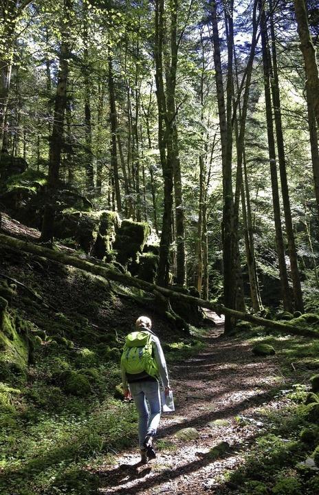 Inmitten dichter Wälder kommen wir schnell zur Ruhe.  | Foto: Ronja Vattes