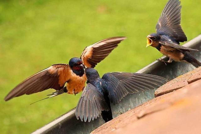 Fotos: Freiburgs bunte Vogelwelt genießt die warme Jahreszeit