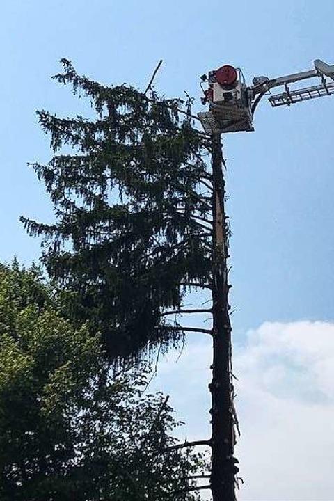 Die Tanne wird stückweise gekappt.  | Foto: Feuerwehr Ehrenkirchen