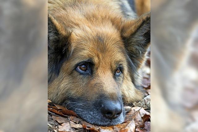 Neuer Anlauf für die Hundesteuer
