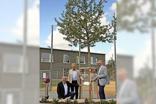 Lions-Club spendet Gottenheim einen Amberbaum