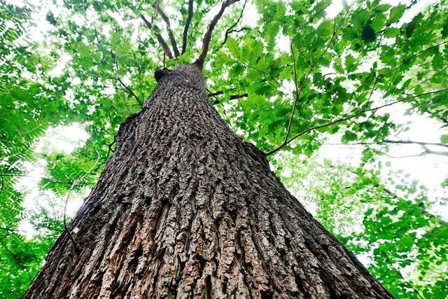 Gundelfingen setzt beim Wald auf Naturschutz statt Gewinnmaximierung