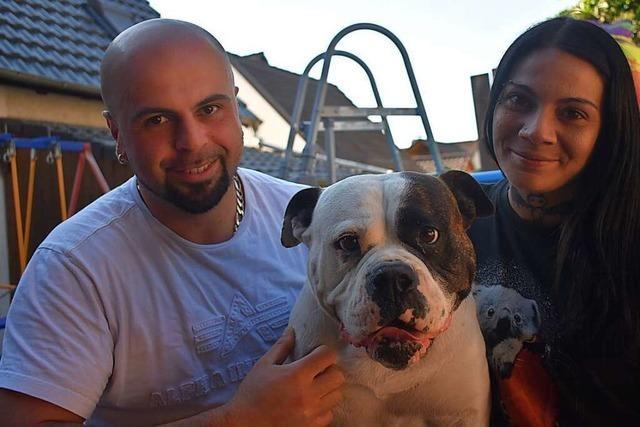 Bulldogge Cira ist kein Kampfhund, sondern Familientier