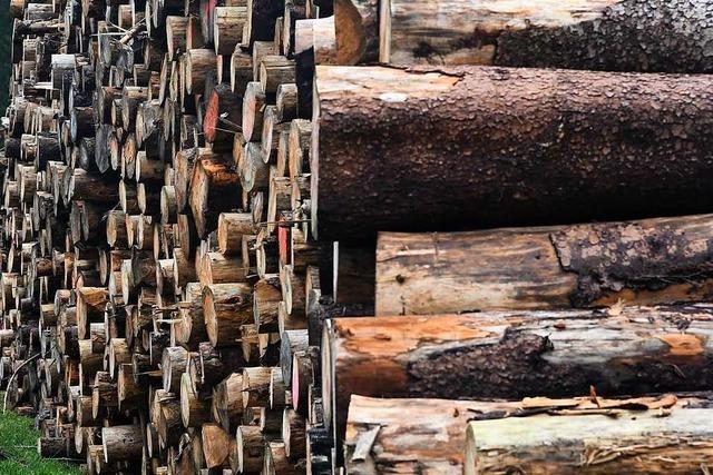 Nassholzlager sollen Holz vor dem Borkenkäfer retten – doch es gibt Kritik