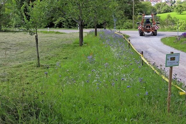 Nachhaltige Bienenwiese