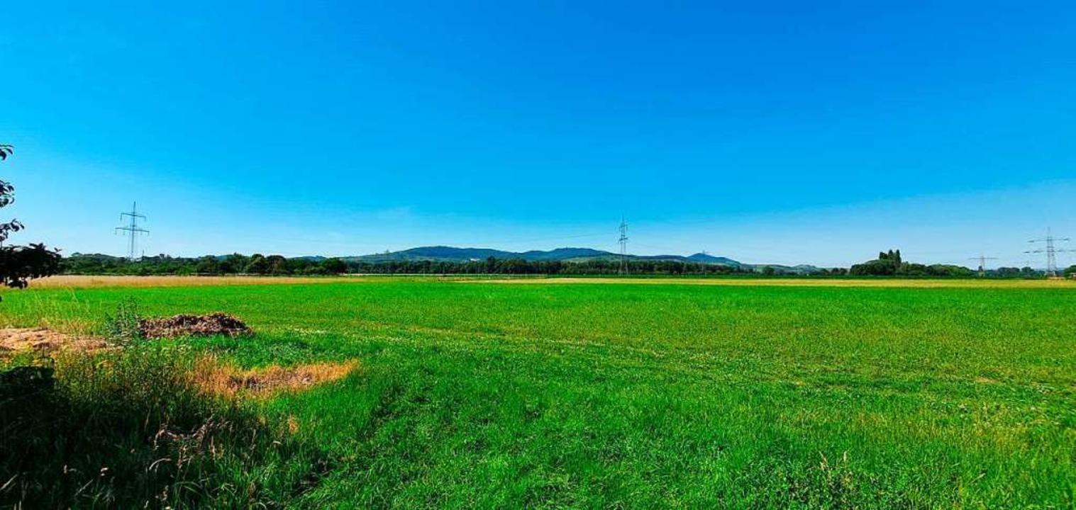 Auf dieser knapp 4,5 Hektar großen Wie...larenergie-Testfeld  errichtet werden.    Foto: Julius Wilhelm Steckmeister