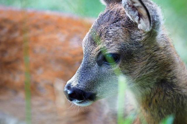 Dank Corona-Krise kommen sich Mensch und Wildtier wieder näher