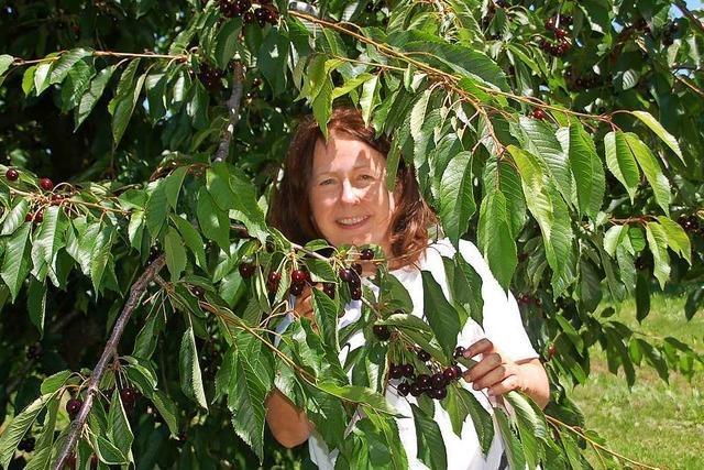 Petra Wunderle hilft auf dem Obsthof Meyer bei der Kirschenernte