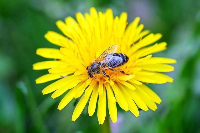 Wo sind all die Bienen hin?