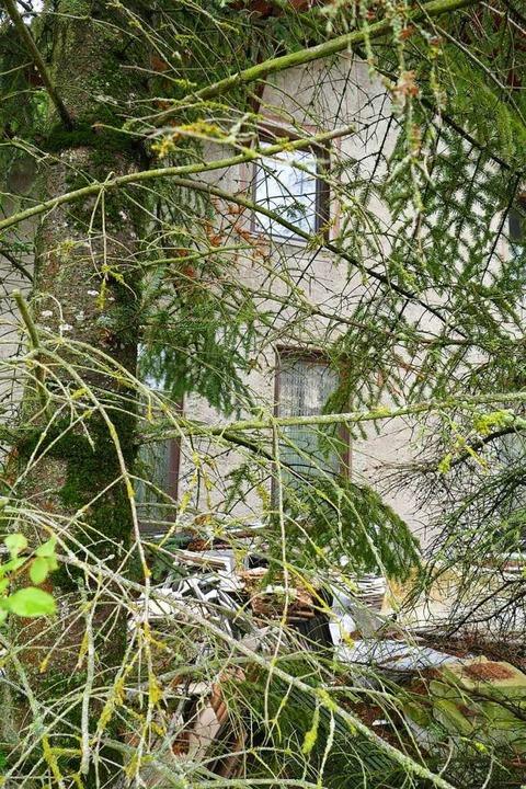 Das leere Haus am  Deichelweg Efringen...llerlei Gestrüpp und Bäumen verborgen.  | Foto: Victoria Langelott