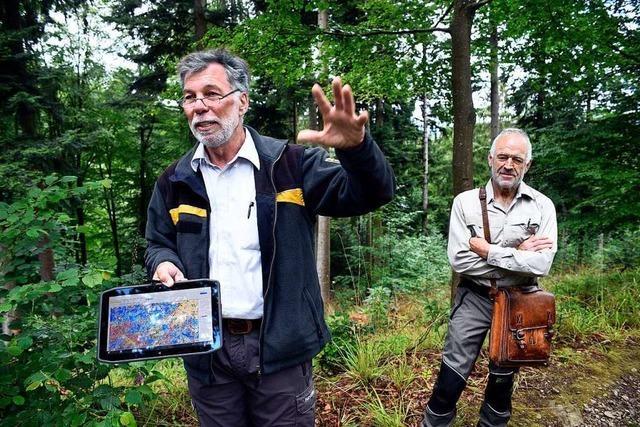 Freiburgs Stadtwald ist in den vergangenen 10 Jahren vielfältiger geworden