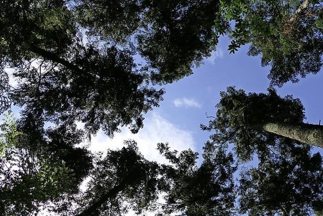Waldbilanz durchwachsen