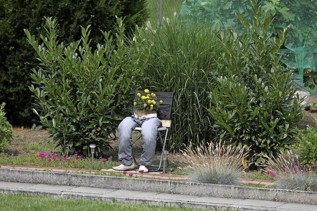 Blühende Hose in Heiligenzell