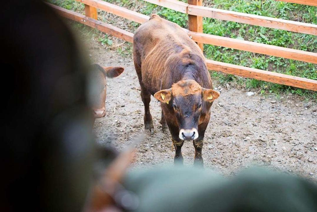 Das Rind stirbt in seiner gewohnten Umgebung.  | Foto: Gabriela Müller