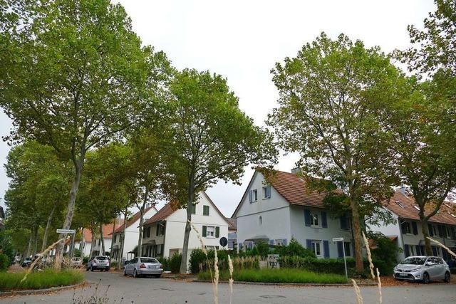 Bäume sollen in Weil am Rhein wieder besser geschützt werden